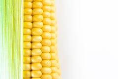 Ripe corn grains on cob. White background. Closeup isolated macro Stock Photos