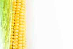 Ripe corn grains on cob. White background. Closeup isolated macro Stock Photography