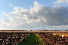 Ripe corn on a rural field Stock Photo