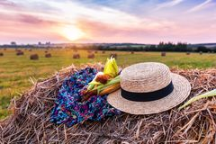 Corn and straw hat Royalty Free Stock Image