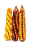 Ripe corn royalty free stock photography