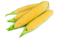Ripe corn on white Royalty Free Stock Images