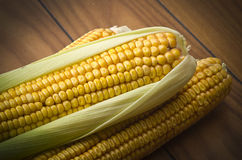 Ripe of corn Stock Image