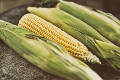 Ripe corn Stock Photography
