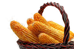 Ripe corncobs Royalty Free Stock Images
