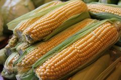 Ripe corncobs. At the market in Budapest, Hungary Royalty Free Stock Photo
