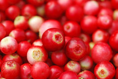 Ripe Cowberry Stock Images