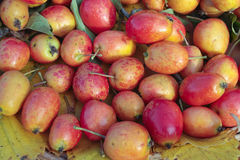 Ripe Crab Apples Stock Photography