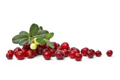 Ripe cranberries Stock Photography