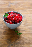 Ripe cranberries in a bowl Stock Photos