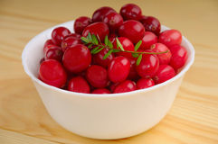 Ripe cranberries Royalty Free Stock Image