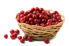 Ripe cranberries isolated stock photography
