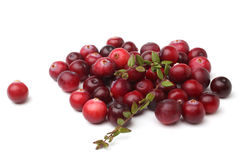 Ripe cranberries with leaves Royalty Free Stock Images
