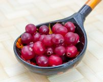 Ripe cranberries_9 Royalty Free Stock Image