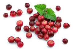 Ripe cranberry with a mint Royalty Free Stock Photos