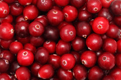 Ripe cranberry Stock Image