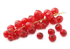 Ripe cranberry twig. Stock Photography