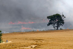 Ripe crop of wheat on fire Stock Photos