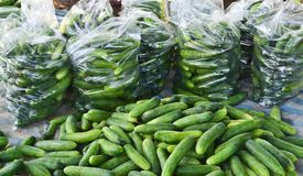 Ripe cucumber form garden. Ripe cucumber in package form garden of thailand Stock Image