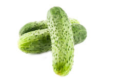 Ripe cucumber Stock Image