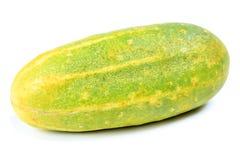 Ripe cucumber; isolation. Royalty Free Stock Photography