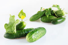 Ripe cucumbers on light surface Stock Images