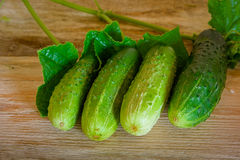 Ripe cucumbers with spices for pickling on a wooden rustic table. Ripe cucumbers, spices for pickling on a rustic wooden table Royalty Free Stock Images