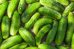 Ripe cucumbers Stock Photos