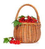 Ripe currant in a basket Royalty Free Stock Images