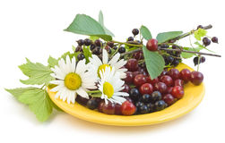 Ripe currant and cherry Royalty Free Stock Photos
