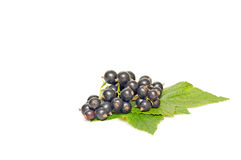 Ripe currant on a white background. Stock Photo
