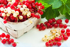 Ripe currants Royalty Free Stock Images