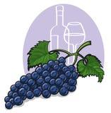 Ripe dark grapes Royalty Free Stock Photography