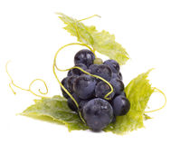 Ripe dark grapes with leaves. Isolated on white background, close up Stock Image