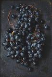 Ripe dark grapes royalty free stock images