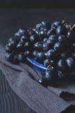 Ripe dark grapes Royalty Free Stock Photos