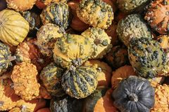 Ripe decorative pumpkins. Royalty Free Stock Photography
