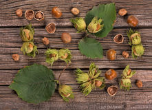 Ripe delicious filberts Royalty Free Stock Images