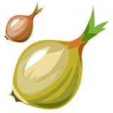 Ripe delicious onion closeup in cartoon style Stock Photo