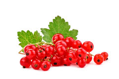 Ripe delicious red currant white background. Royalty Free Stock Photo