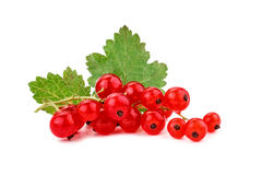 Ripe delicious red currant white background. Stock Images