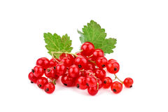 Ripe delicious red currant white background. Royalty Free Stock Images