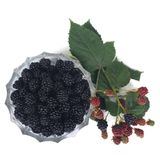 Ripe dewberry in a bowl and a branch with berries Stock Image