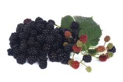 Ripe dewberry  on white Stock Image