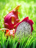 Ripe dragon fruit Stock Images