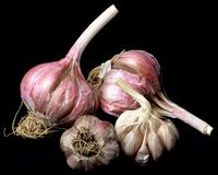 Ripe Dried Garlic. Heap of Ripe Dried Garlic with Stems isolated on Black background Stock Photo