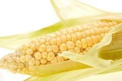 Ripe ear of corn. Royalty Free Stock Photography