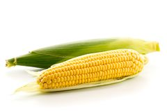 Ripe ear of corn on a white. Background, isolated Royalty Free Stock Photo