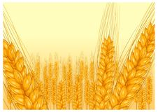 Ripe ear wheat Royalty Free Stock Images