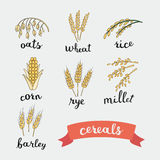 Ripe ears of cereals lettering names in English Stock Photography